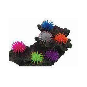 Caja con 8 Anémonas Mini (colores surtidos)